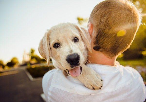 על מה כדאי להקפיד בזמן טיול עם הכלב?